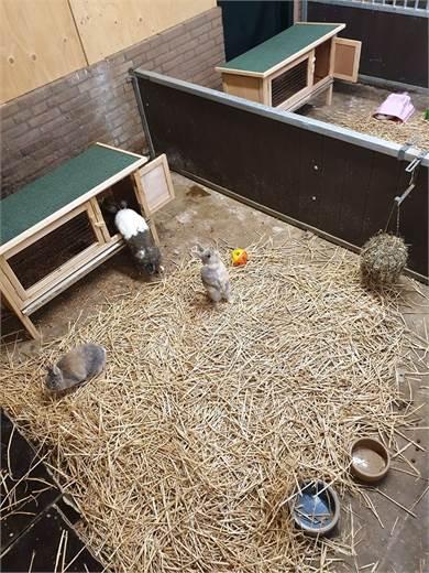 Nieuwe huisjes voor onze cavia's en konijntjes